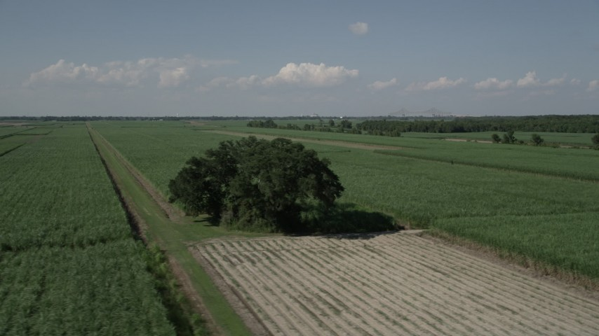 5K stock footage aerial video flyby a lone tree surrounded by sugar cane fields, Vacherie, Louisiana Aerial Stock Footage | AX60_053