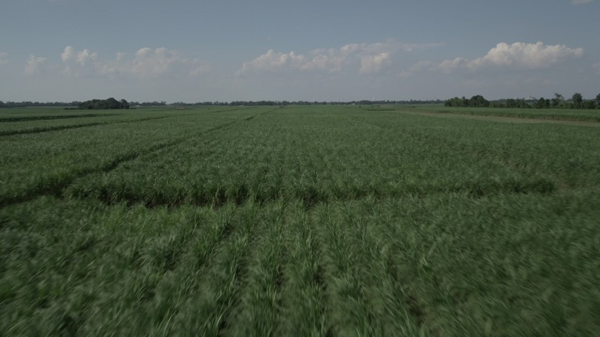 5K stock footage aerial video of low altitude flight over sugar cane fields, Vacherie, Louisiana Aerial Stock Footage | AX60_055