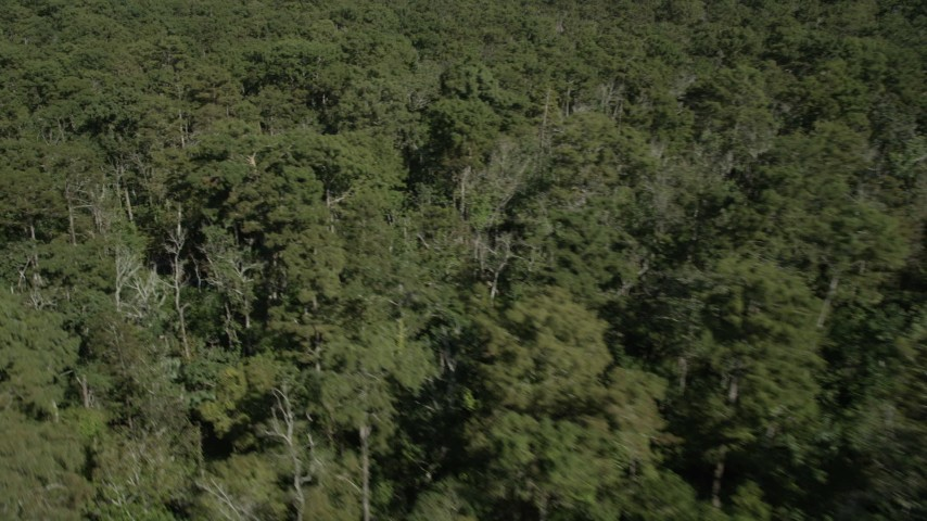 5K stock footage aerial video flyby trees and swamp in John the Baptist Parish, Louisiana Aerial Stock Footage | AX60_078