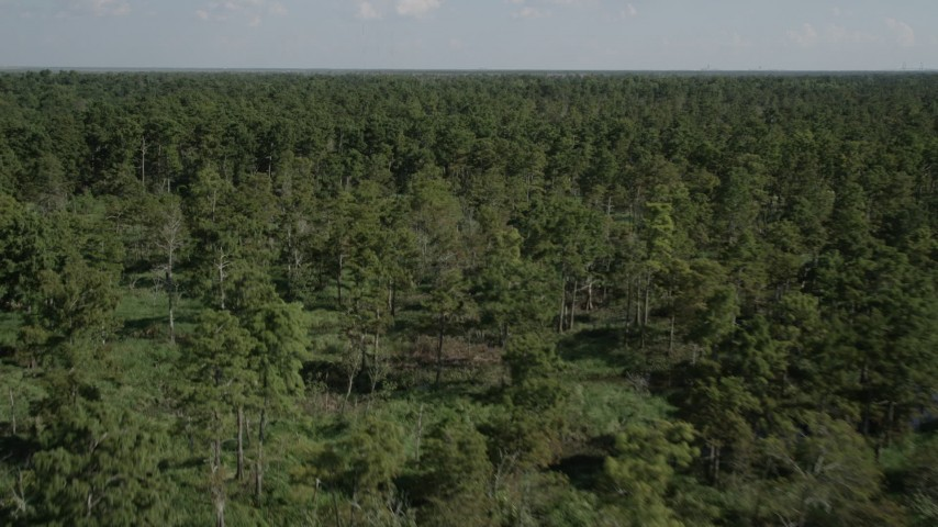 5K stock footage aerial video fly over trees and swamps in St. John the Baptist Parish, Louisiana Aerial Stock Footage | AX60_080