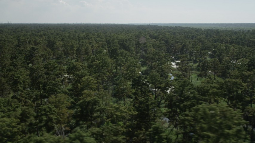 5K stock footage aerial video of passing by trees and water in a swamp in St. John the Baptist Parish, Louisiana Aerial Stock Footage | AX60_081