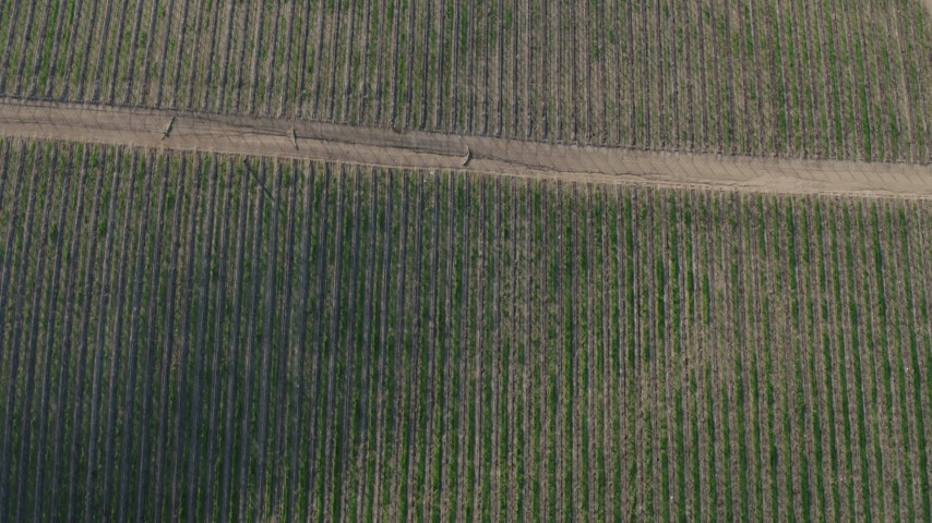 4K stock footage aerial video Bird's eye of roads and vines at a vineyard in Paicines, California Aerial Stock Footage   AX70_137