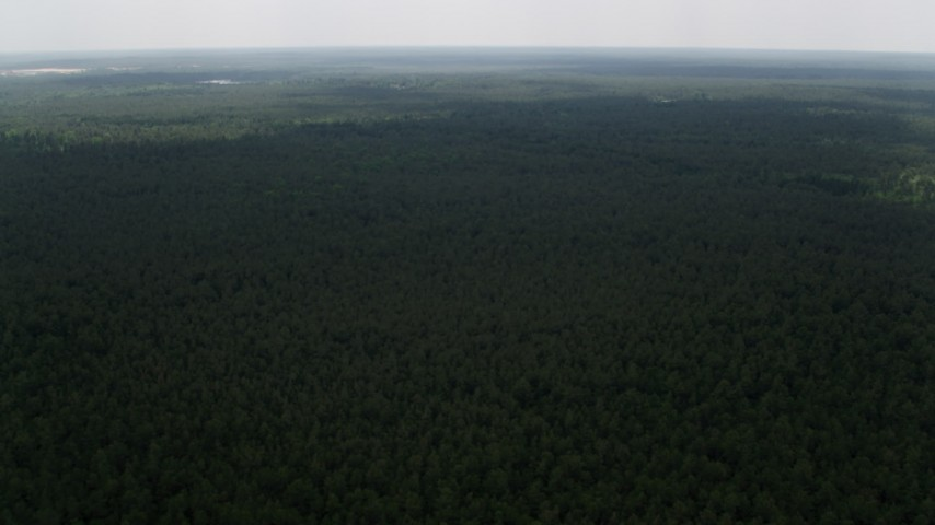 5K aerial video flying over evergreen trees, Pine Barrens, New Jersey Aerial Stock Footage | AX71_116
