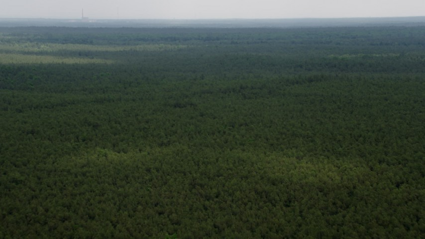 5K aerial video flying over evergreens in Pine Barrens, New Jersey Aerial Stock Footage | AX71_123