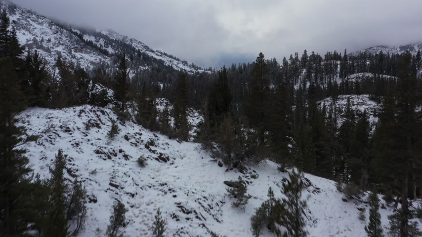 4K stock footage aerial video fly over trees and snow-covered mountain slopes, Inyo National Forest, California Aerial Stock Footage | CAP_015_018
