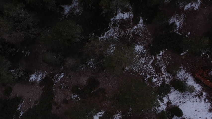 4K stock footage aerial video a bird's eye view of a snowy evergreen forest, Inyo National Forest, California Aerial Stock Footage | CAP_019_006