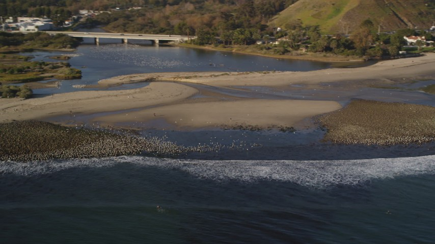 Flocks of Birds by the Beach in Malibu, California Aerial Stock Footage | DCLA_172