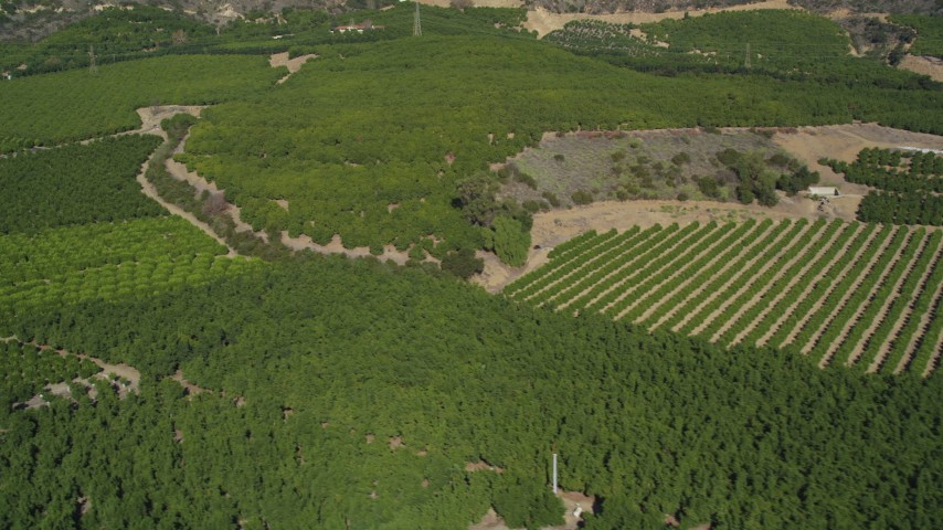5K stock footage aerial video of flying by fields of orchards on farms, Fillmore, California Aerial Stock Footage | DFKSF01_013
