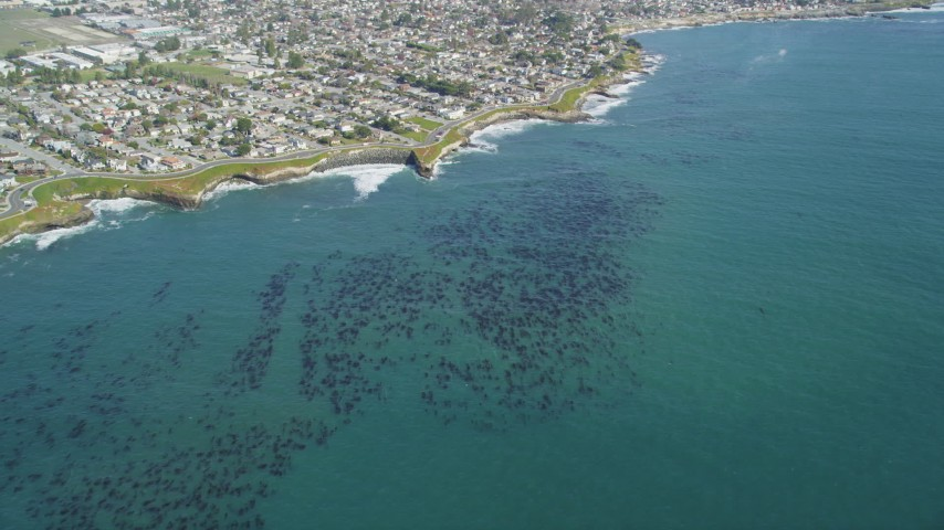 5K stock footage aerial video of kelp forests near coastal neighborhoods, Santa Cruz, California Aerial Stock Footage | DFKSF15_119