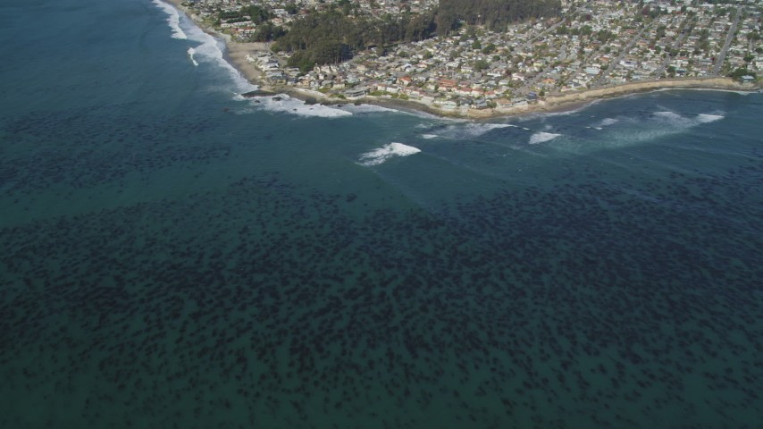 5K stock footage aerial video of kelp forests near coastal neighborhoods, Santa Cruz, California Aerial Stock Footage | DFKSF15_139