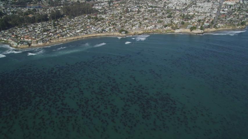 5K stock footage aerial video of kelp forests near coastal neighborhoods, Santa Cruz, California Aerial Stock Footage | DFKSF15_140