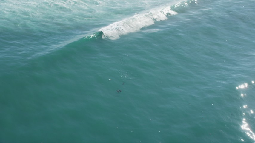 5K stock footage aerial video of seagulls and seals swimming in the ocean, Moss Landing, California Aerial Stock Footage | DFKSF15_150