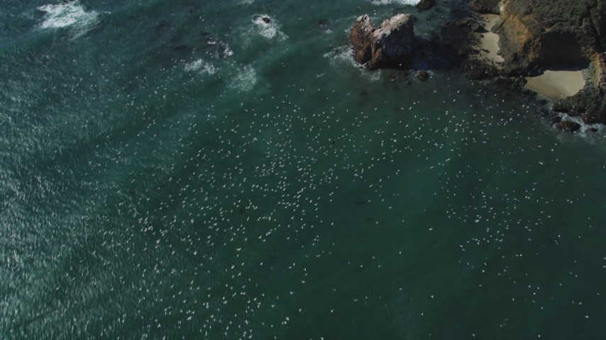 5K aerial video of tracking flocks of seagulls flying over the ocean near coast, Big Sur, California Aerial Stock Footage | DFKSF16_099