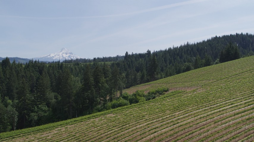 5.7K stock footage aerial video of rows of grapevines at Phelps Creek Vineyards and distant Mount Hood in Hood River, Oregon Aerial Stock Footage | DX0001_000151