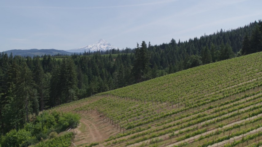 5.7K stock footage aerial video of Mount Hood seen from hillside Phelps Creek Vineyards in Hood River, Oregon Aerial Stock Footage | DX0001_000152
