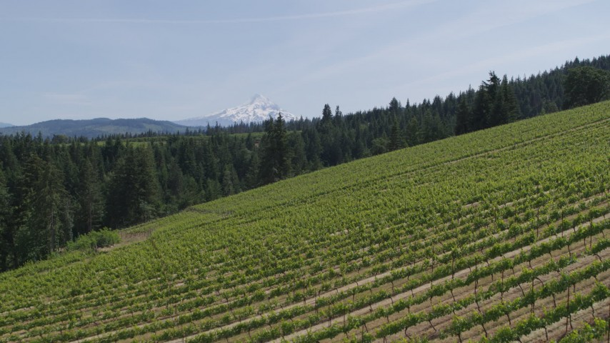 5.7K aerial video of a reverse view of Mount Hood seen from hillside Phelps Creek Vineyards in Hood River, Oregon Aerial Stock Footage | DX0001_000153