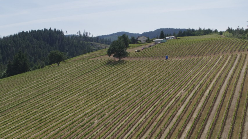 5.7K aerial video of descending by grapevines on a hillside at Phelps Creek Vineyards in Hood River, Oregon Aerial Stock Footage | DX0001_000155