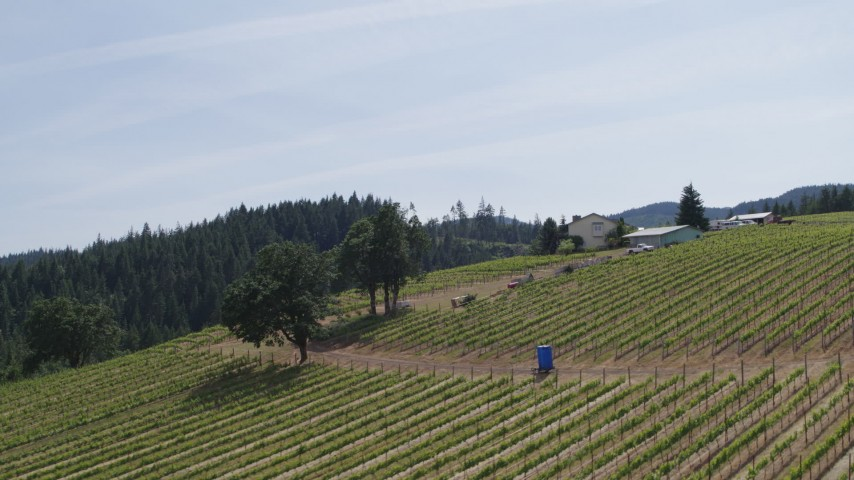 5.7K stock footage aerial video fly uphill by rows of grapevines at Phelps Creek Vineyards in Hood River, Oregon Aerial Stock Footage   DX0001_000159