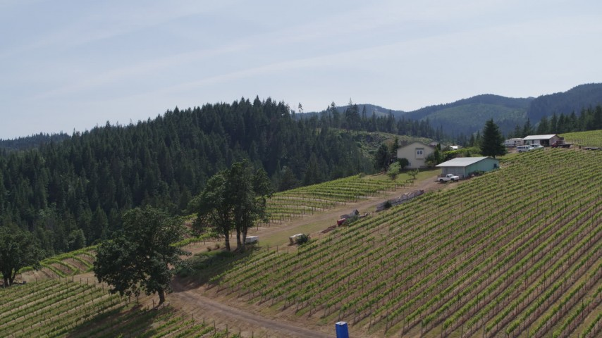 5.7K aerial video of flying away from rows of grapevines at a hillside vineyard in Hood River, Oregon Aerial Stock Footage | DX0001_000160
