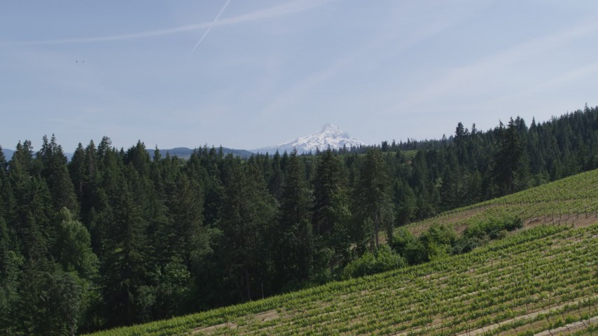 5.7K stock footage aerial video of flying over grapevines at Phelps Creek Vineyards toward Mount Hood in Hood River, Oregon Aerial Stock Footage | DX0001_000161