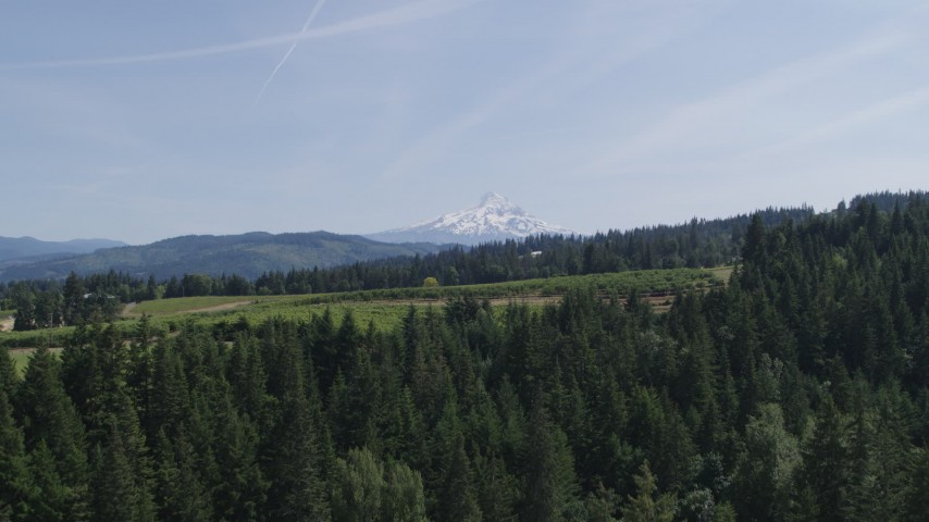 5.7K aerial video of flying over trees toward Mount Hood, and reveal Phelps Creek Vineyards in Hood River, Oregon Aerial Stock Footage DX0001_000162