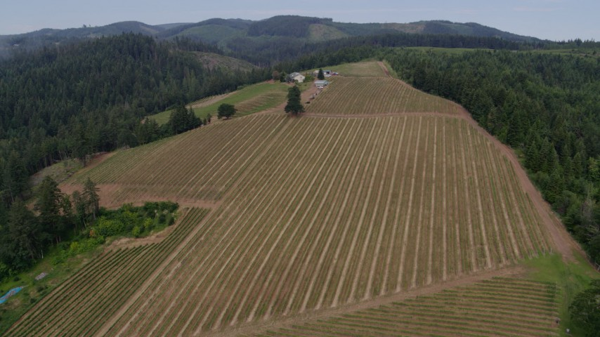 6k drone aerial video approach and descend toward vineyards, Hood River, Oregon Aerial Stock Footage | DX0001_000334