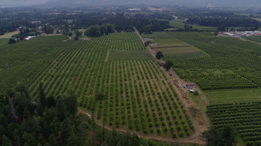 5.7K stock footage aerial video of a reverse view of orchards in Hood River, Oregon Aerial Stock Footage | DX0001_000338