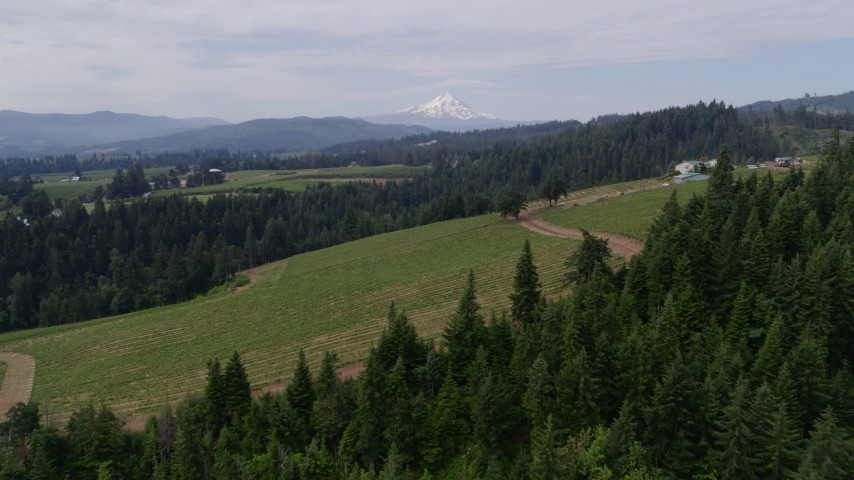 5.7K stock footage aerial video approach and descend toward vineyards with a view of Mt Hood, Hood River, Oregon Aerial Stock Footage | DX0001_000341