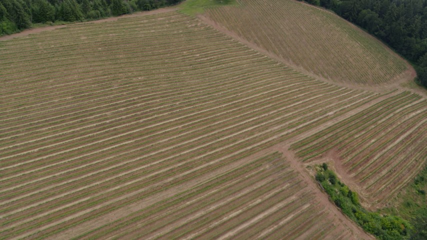 5.7K stock footage aerial video approach and fly over grapevines, Hood River, Oregon Aerial Stock Footage | DX0001_000343