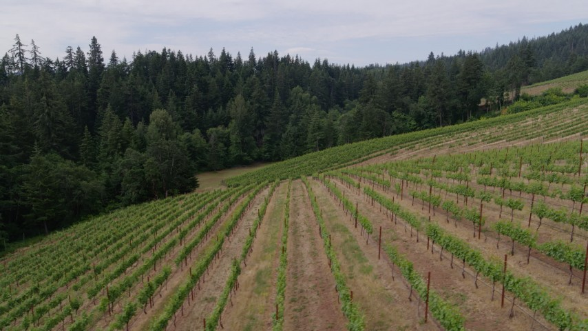 5.7K stock footage aerial video of flying by rows of grapevines, Hood River, Oregon Aerial Stock Footage | DX0001_000346