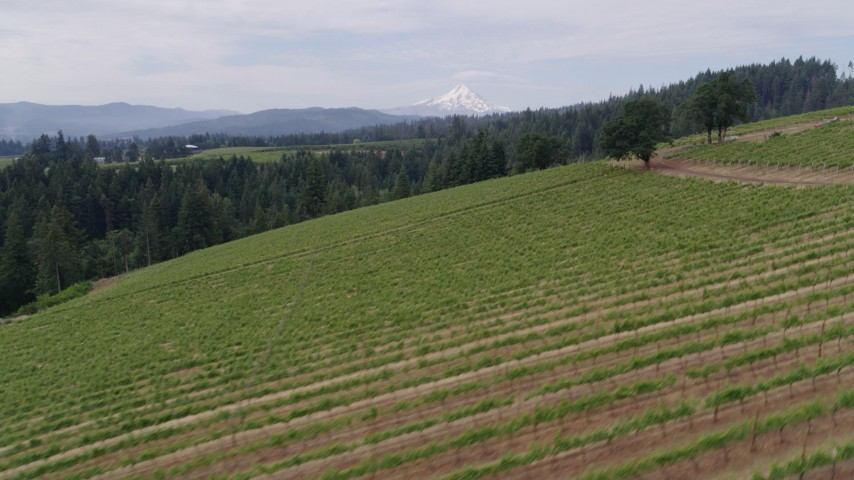 5.7K stock footage aerial video flying low by the grapevines with Mt Hood in the distance, Hood River, Oregon Aerial Stock Footage | DX0001_000347