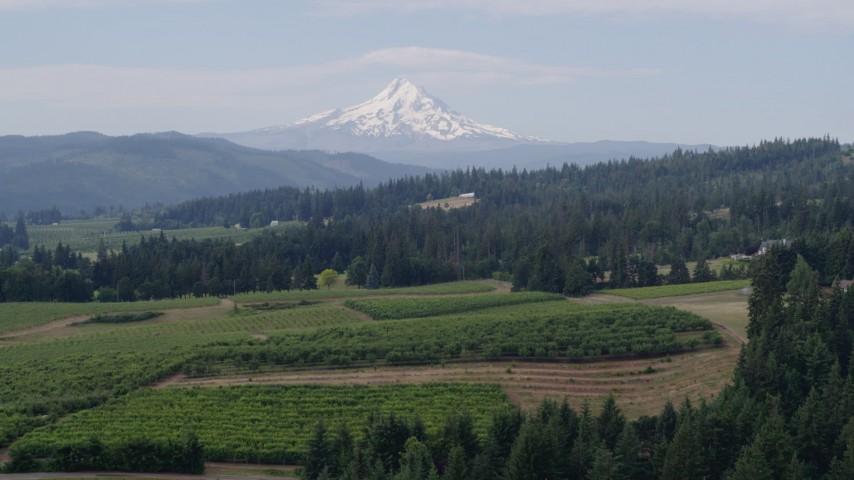 5.7K stock footage aerial video fly over grapevines to approach orchards and Mt Hood in the distance, Hood River, Oregon Aerial Stock Footage | DX0001_000349