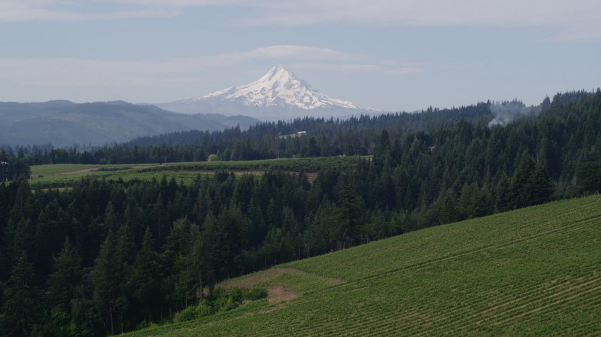 5.7K aerial video descend toward vineyards and Mt Hood, Hood River, Oregon Aerial Stock Footage | DX0001_000351
