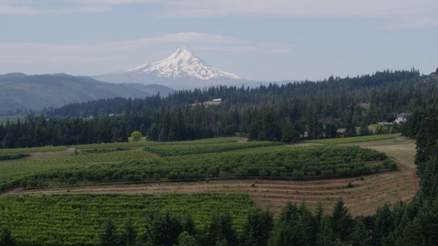 5.7K aerial video fly over vineyards toward orchards and Mt Hood, Hood River, Oregon Aerial Stock Footage | DX0001_000352