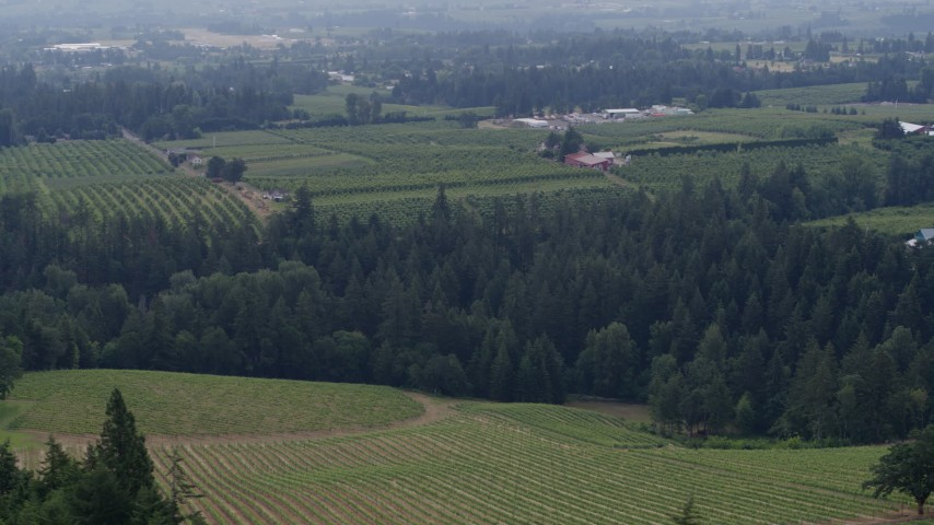 5.7K aerial video of Phelps Creek Vineyards and neighboring orchards in Hood River, Oregon Aerial Stock Footage | DX0001_000355
