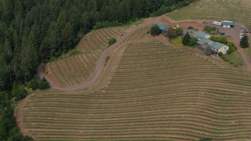 5.7K stock footage aerial video of circling hillside grapevines at the Phelps Creek Vineyards in Hood River, Oregon Aerial Stock Footage | DX0001_000378