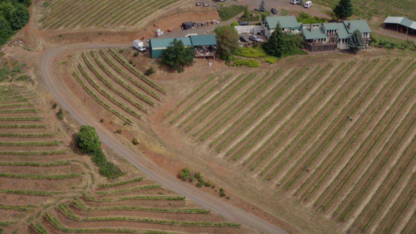 5.7K aerial video a view of rows of grapevines at the Phelps Creek Vineyard in Hood River, Oregon Aerial Stock Footage | DX0001_000379