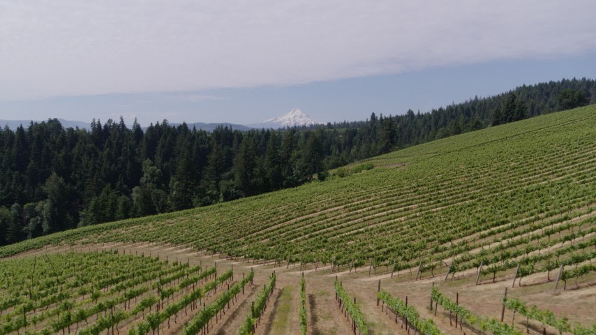 5.7K aerial video fly low over grapevines to approach Mt Hood in the distance, Hood River, Oregon Aerial Stock Footage | DX0001_000382