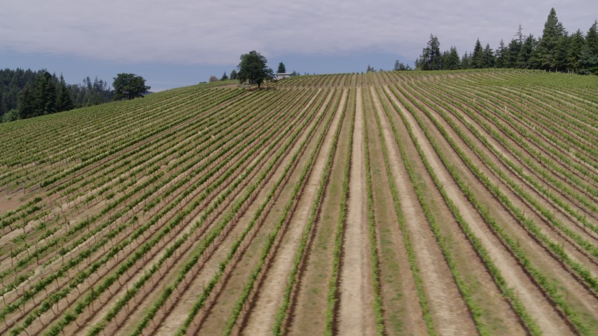 5.7K stock footage aerial video of passing long rows of grapevines on a hillside in Hood River, Oregon Aerial Stock Footage | DX0001_000383