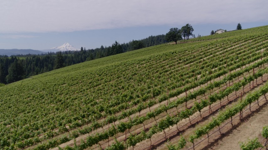 5.7K aerial video fly over grapevines and pan to reveal Mt Hood, Hood River, Oregon Aerial Stock Footage | DX0001_000387