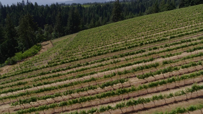 5.7K stock footage aerial video of flying over grapevines and panning across the rows in Hood River, Oregon Aerial Stock Footage | DX0001_000389