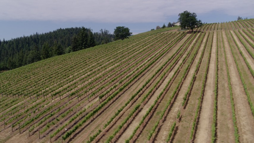5.7K aerial video pan and flyby rows of grapevines, Phelps Creek Vineyards, Hood River, Oregon Aerial Stock Footage | DX0001_000390