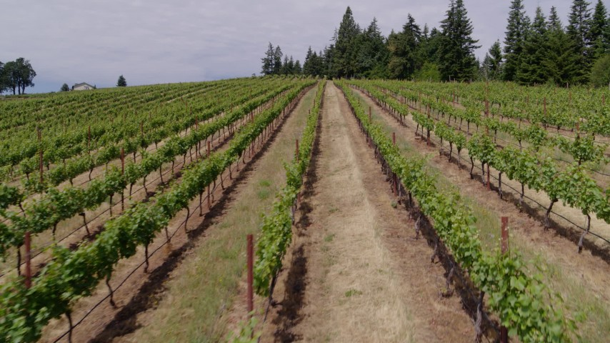 5.7K aerial video of flying low over rows of grapevines, Hood River, Oregon Aerial Stock Footage | DX0001_000391