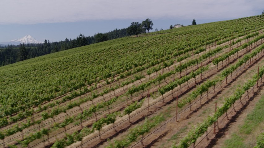 5.7K stock footage aerial video of passing a hillside with rows of grapevines and a view of Mt Hood, Hood River, Oregon Aerial Stock Footage | DX0001_000392