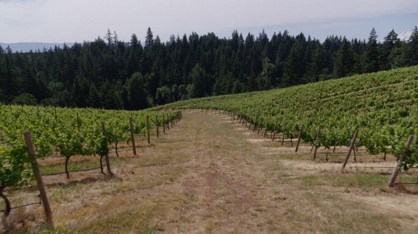 5.7K stock footage aerial video of following a path past rows of grapevines, Hood River, Oregon Aerial Stock Footage | DX0001_000393