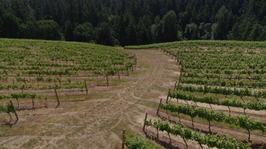 5.7K stock footage aerial video of a reverse view of rows of grapevines beside a path in Hood River, Oregon Aerial Stock Footage | DX0001_000394