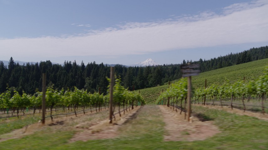 5.7K aerial video ascending over the fields of grapevines with a view of Mt Hood, Hood River, Oregon Aerial Stock Footage | DX0001_000404