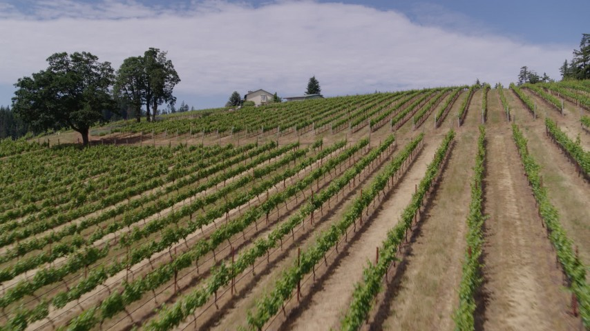 5.7K stock footage aerial video fly low over grapevines uphill toward the winery in Hood River, Oregon Aerial Stock Footage | DX0001_000406