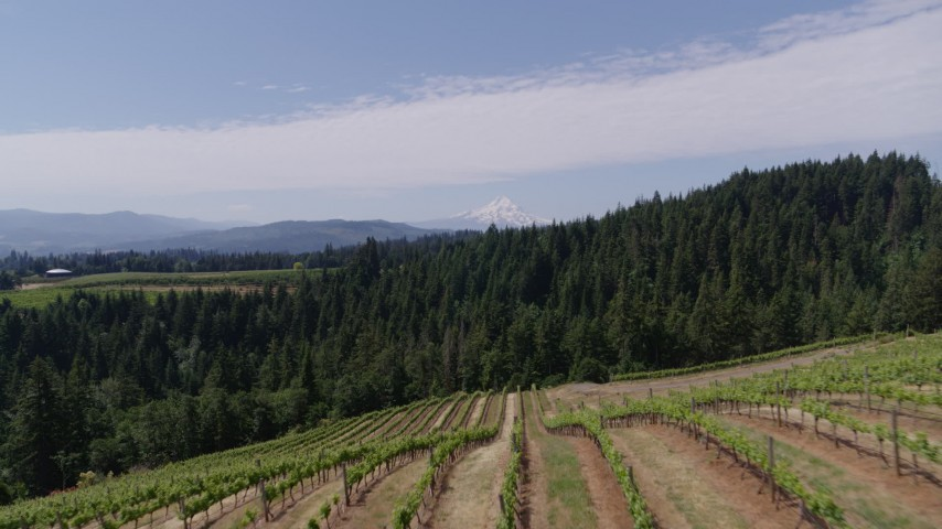 5.7K stock footage aerial video fly over fields of grapevines and pan to reveal Mt Hood, Hood River, Oregon Aerial Stock Footage | DX0001_000407