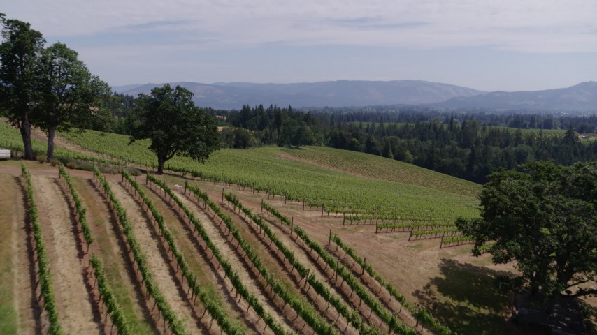 5.7K stock footage aerial video fly low altitude over fields of grapevines in Hood River, Oregon Aerial Stock Footage   DX0001_000408